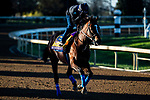 November 4, 2020: Maximum Security, trained by trainer Bob Baffert, exercises in preparation for the Breeders' Cup Classic at Keeneland Racetrack in Lexington, Kentucky on November 4, 2020. Jon Durr/Eclipse Sportswire/Breeders Cup