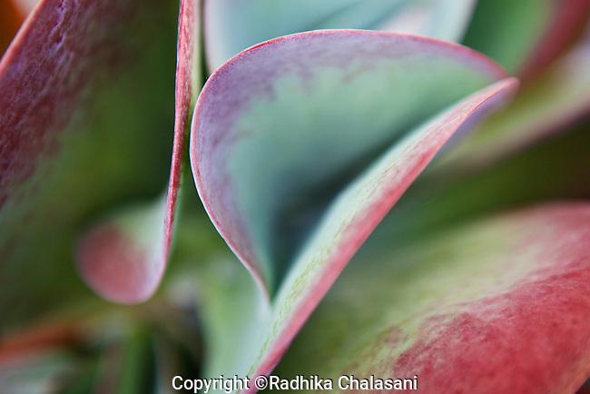 MANHATTAN BEACH, CA-AUGUST 30: Plants