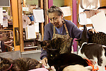 January 2, 2013. Pittsboro, North Carolina.. Ms. Scarpa pets cats inside the main refuge building where hundreds of cats sleep and play. After they have all received their vaccinations, they join the main population and can roam the building and surrounding, fenced in grounds.. Siglinda Scarpa, originally from northern Italy, runs the Goathouse Refuge, a no kill shelter for cats. Scarpa, who is also a ceramic artist, runs the shelter with 5 full time employees and currently has over 260 cats in the refuge..