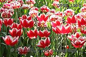 Gisela, FLOWERS, BLUMEN, FLORES, photos+++++,DTGK1925,#f#