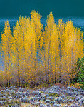 Willows (Salix sp.), Grand Teton National Park, Wyoming, USA<br /> <br /> Canon EOS 5DS R, EF200-400mm f/4L IS USM lens, f/14 for 1/5 second, ISO 100