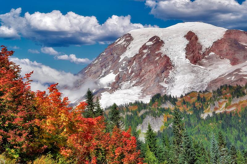 Mt. Rainier with vine maple in fall color. Mt. Rainier National Park. Washington