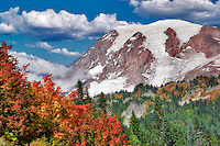 Mt. Rainier with vine maple in fall color. Mt. Rainier National Park. Washington