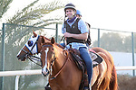 March 25, 2021: Dubai World Cup contender Mystic Guide trains on the track for trainer Michael Stidham at Meydan Racecourse, Dubai, UAE. Shamela Hanley/Eclipse Sportswire/CSM
