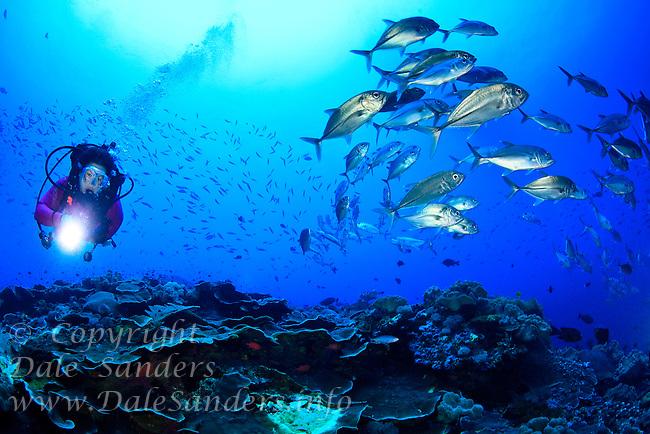 Female scuba diver swims beside a large school of Bigeye Jacks or Travally (Caranx sexfasciatus) at Bradford Shoals in Kimbe Bay off New Britain Island, Papua New Guinea.
