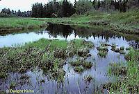 WF23-010z  Stream floodplain - habitat of endangered mayfly - Siphlonisca aerodromia