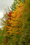 Changing of the leaves 10-20-19-343