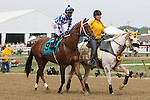 May 16, 2015: Holy Boss, Ricardo Santana Jr. up, takes part in the post parade before winning the 6th running of the Chick Lang Stakes at Pimlico Race Course in Baltimore, MD. Trainer is Steve Asmussen, owner is Jerry Durant. Joan Fairman Kanes/ESW/CSM