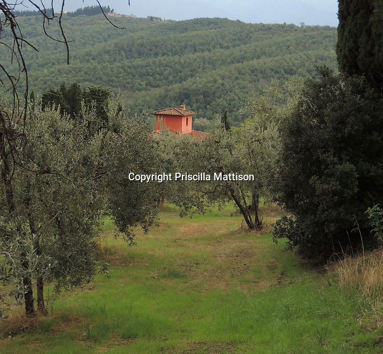 San Donato in Collina, Italy - October 2, 2012:  An ocher-colored house rises above olive trees.