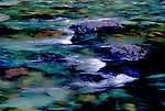 Upper Imnaha River hurries through a shady stretch enroute to carving it's canyon down to Hells Canyon level.