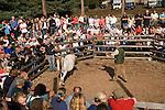 The annual New Forest Pony autumn auction Beaulieu Road Saleyard Lyndhurst, Hampshire England 2006..