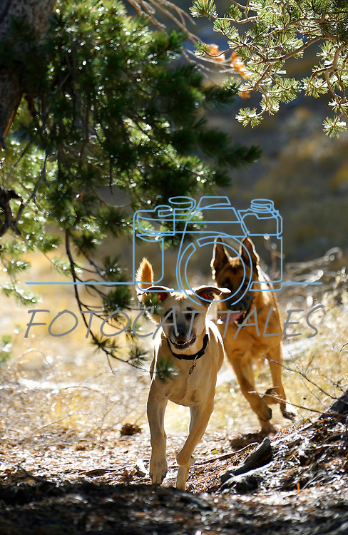 Images from a hike from Caples Lake to Emigrant Lake, near Kirkwood, Ca., on Friday, Oct. 25, 2019.  <br /> Photo by Cathleen Allison/Nevada Momentum