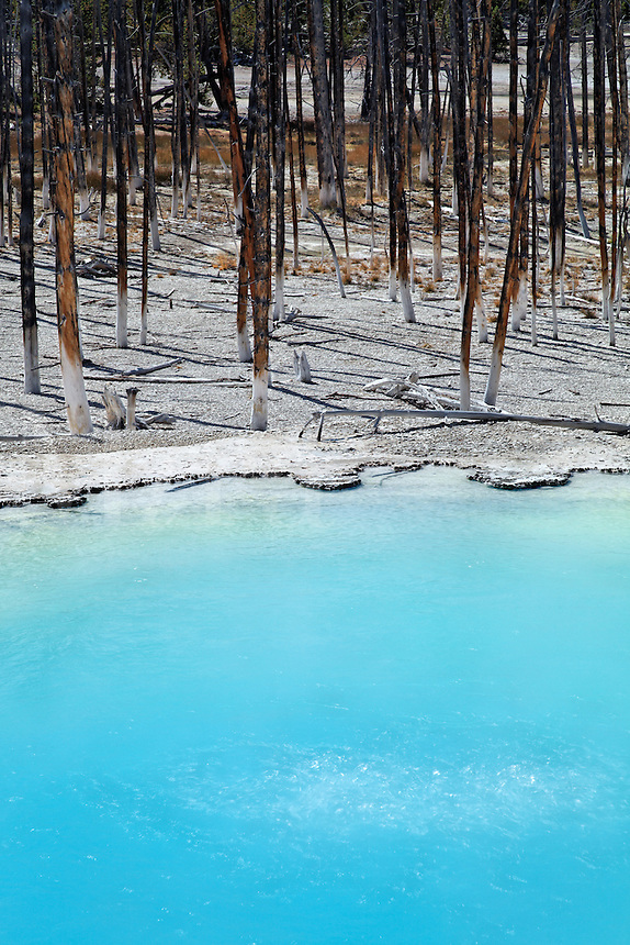 Edge of Cistern Spring at Norris Geyser Basin, Yellowstone National Park, Wyoming, USA
