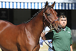 Hip #150 Awesome Again - Orate colt consigned by Claiborne farm sold for $400,000at the Keeneland September Yearling Sale.  September 11, 2012.