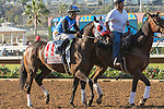 DEL MAR, CA  SEPTEMBER 4: #11 Free Rose and Norberto Arroyo, Jr in the post parade of the Del Mar Derby (Gll)  September 4, 2016 at Del Mar, CA (Photo by Casey Phillips/Eclipse Sportswire/Getty Images)