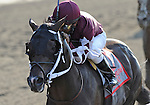 Tizway (no. 11), ridden by Rajiv Maragh and trained by H. James Bond, wins the 118th running of the grade 1 Metropolitan Handicap for three year olds and upward on May 30, 2011 at Belmont Park in Elmont, New York.  (Bob Mayberger/Eclipse Sportswire)