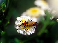 Insect on flower.