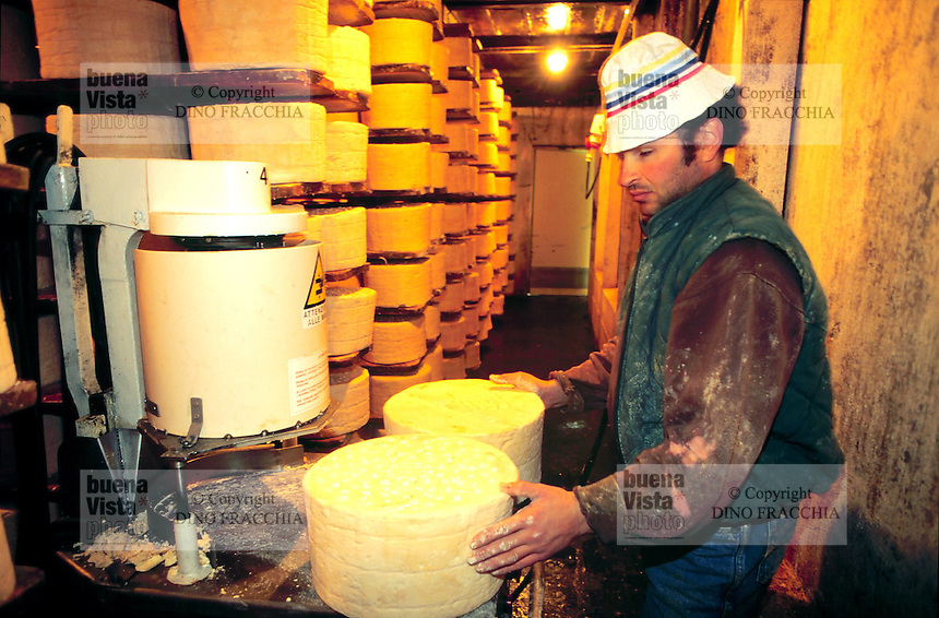 - production of DOC gorgonzola cheese, Albanian immigrant worker proceeds to the  operation of poking with needles the cheese, this creates air channels which allows the mold spores to germinate and create the characteristic veining....- produzione del formaggio gorgonzola DOC, operaio immigrato albanese procede alla operazione di erborinatura