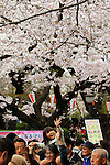 April 3, 2016, Tokyo, Japan - A girl, riding on the shoulders of her father, extends her hand to touch fully bloomed cherry blossoms at a park in Tokyo on Sunday, April 3, 2016. Despite the rain, people enjoyed cherry blossom viewing party. (Photo by Yoshio Tsunoda/AFLO) LWX -ytd-