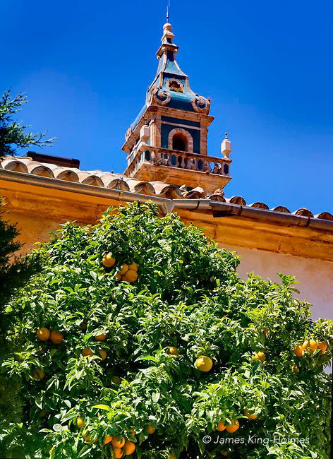Orange tree in the garden of the monastic cell in the Carthusian monastery in Valledmossa, Mallorca, where the composer Frédéric Chopin stayed in 1838-39 with his lover George Sand (Amantine Dupin). The distinctive tower of the 14th Century monastic building known as the Royal Charterhouse of Jesus of Nazareth, or the Valldemossa Charterhouse, lies behind the tree.