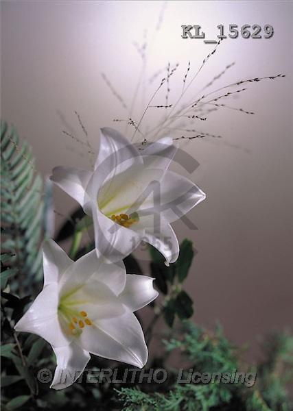 Interlitho, Erica, SYMPATHY, photos, white lilies(KL15629,#T#) Beileid, condolación