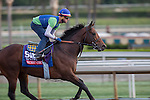 OCT 26 2014:Secret Circle, trained by Bob Baffert, exercises in preparation for the Breeders' Cup Xpressbet Sprint at Santa Anita Race Course in Arcadia, California on October 26, 2014. Kazushi Ishida/ESW/CSM