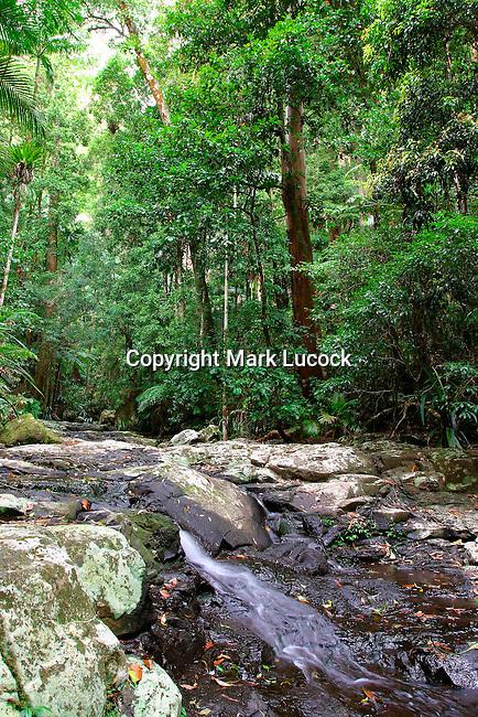 Nightcap National Park, NSW