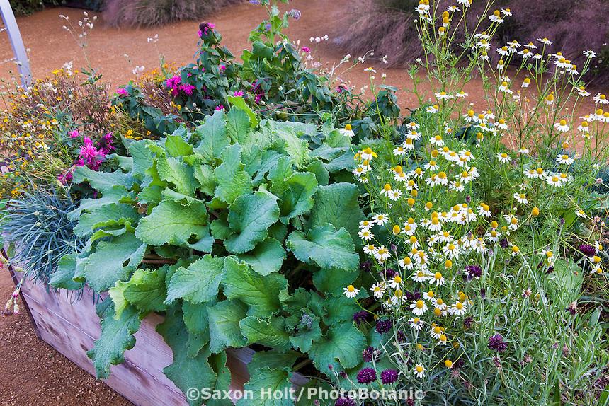 Raised bed leafy greens and herbs; Sunset demonstration garden; Cornerstone Gardens. Sonoma, California