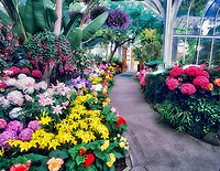A variety of flowers and path in WW Seymour Botanical Conservatory. Tacoma, Washington