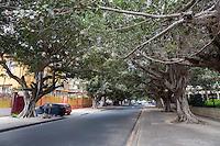 Dakar, Senegal.  Rue du Marechal Foch, a tree-lined street near the National asembly.