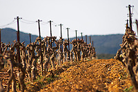 Domaine Mas Gabinele. Faugeres. Languedoc. Terroir soil. In the vineyard. France. Europe.