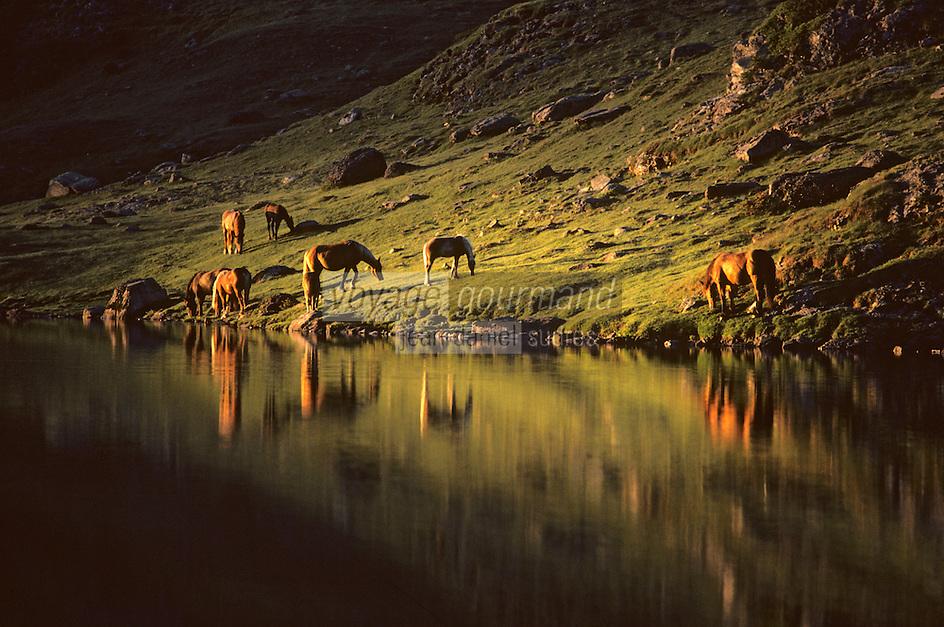 Europe/France/Aquitaine/64/Pyrénées-Atlantiques/Parc National des Pyrénées: Le lac d'Ayous et chevaux en pâture à l'aube