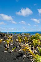 Kaimu beach area, Kalapana coast, Hawaii, Big Island of Hawaii