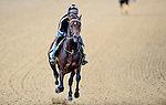 LOUISVILLE, KY - MAY 04: Exaggerator, trained by J. Desormeaux and owned by Big Chief Racing, LLC, Rocker O Ranch, LLC and Desormeaux, J. Keith, exercises and prepares during morning workouts for the Kentucky Derby and Kentucky Oaks at Churchill Downs on May 4, 2016 in Louisville, Kentucky. (Photo by John Voorhees/Eclipse Sportswire/Getty Images)