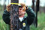 Steve Newland Measuring Tree