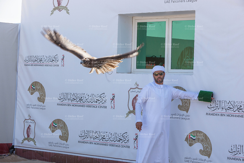 United Arab Emirates (UAE). Abu Dhabi. Organised jointly by the Hamdan Bin Mohammed Center for the Revival of Heritage (HHC) and Abu Dhabi Falconers Club, the UAE Falconers League has a total of nine rounds that ran until February 19 between Dubai and Abu Dhabi. A falconer has freed his hawk which starts flying the 400 meters race competition. The man is wearing a white thawb (thobe, dishdasha, kandora) which is an ankle-length garment, usually with long sleeves, similar to a robe, kaftan or tunic, commonly worn in the Arabian Peninsula. The headdress is called ghutrah. Falcons are birds of prey in the genus Falco, which includes about 40 species. Adult falcons have thin, tapered wings, which enable them to fly at high speed and change direction rapidly. Additionally, they have keen eyesight for detecting food at a distance or during flight, strong feet equipped with talons for grasping or killing prey, and powerful, curved beaks for tearing flesh. The United Arab Emirates (UAE) is a country in Western Asia at the northeast end of the Arabian Peninsula. 18.02.2020  © 2020 Didier Ruef