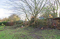Saturday 10 January 2015<br /> Pictured: Fallen tree  <br /> RE: Severe gales across Wales uproot a 100 year old beech tree from a garden falling across Penllwyn Lane in Graig-Y-Rhacca, Caerphilly, road closed.