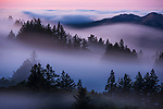 Pictured: Fog at Mount Tamalpais State Park, California, USA.<br /> <br /> Amazing aerial photos show off the majesty of America's landscape, its architecture, its industry and its wildlife.   From the startling blue potash pools of Utah to hundreds of aircraft sitting unused due to the pandemic, the images display a little seen side of the USA.<br /> <br /> Other images include a passenger plane plane as it touches down in California taken 4,500ft above it, fog over the Golden Gate Bridge and a solar farm in Nevada.   Professor of Music Jassen Todorov, from San Francisco, captured the striking pictures of the American West while flying in a light aircraft.   SEE OUR COPY FOR DETAILS<br /> <br /> Please byline: Jassen Todorov/Solent News<br /> <br /> © Jassen Todorov/Solent News & Photo Agency<br /> UK +44 (0) 2380 458800