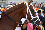 June 8, 2013. Belmont contender Midnight Taboo enters the track for the post parade. Palace Malice, Mike Smith up, wins the Belmont Stakes at Belmont Park, Elmont, New York. Trainer is Todd Pletcher (Joan Fairman Kanes/Eclipse Sportswire)
