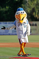 Myrtle Beach Pelicans mascot Splash Pelican (50) on the field before a game against the Carolina Mudcats at Ticketreturn.com Field at Pelicans Ballpark on June 7, 2015 in Myrtle Beach, South Carolina. Myrtle Beach defeated Carolina 4-1. (Robert Gurganus/Four Seam Images)