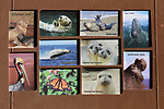 Photo magnets by Frank Balthis