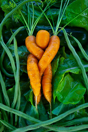Shapely tri-part carrot from Community Garden, Yarmouth ME
