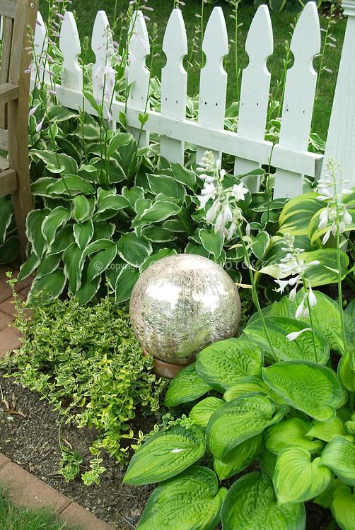 Garden gazing Ball, white picket fence, Hosta Frances Williams, variegated hosta in summer