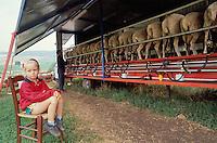 - plateau of High Maceratese, gathering of mountain sheep farmers ....- altopiano dell'Alto Maceratese, raduno allevatori di ovini di montagna