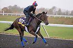 October 28, 2015:  Peace and War, trained by H. Graham Motion and owned by Qatar Racing Limited, exercises in preparation for the Longines Breeders' Cup Distaff at Keeneland Race Track in Lexington, Kentucky on October 28, 2015. Jon Durr/ESW/CSM