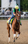 LOUISVILLE, KY - MAY 02: Hofburg gallops in preparation for the Kentucky Derby at Churchill Downs on May 2, 2018 in Louisville, Kentucky. (Photo by Alex Evers/Eclipse Sportswire/Getty Images)