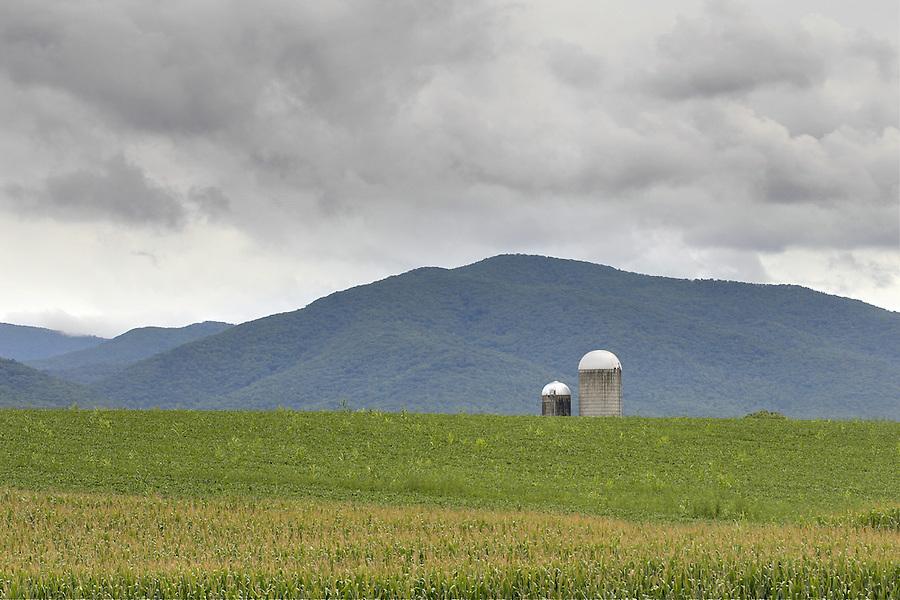 Farm silos appear over a corn field in Greene County, VA. Photo/Andrew Shurtleff