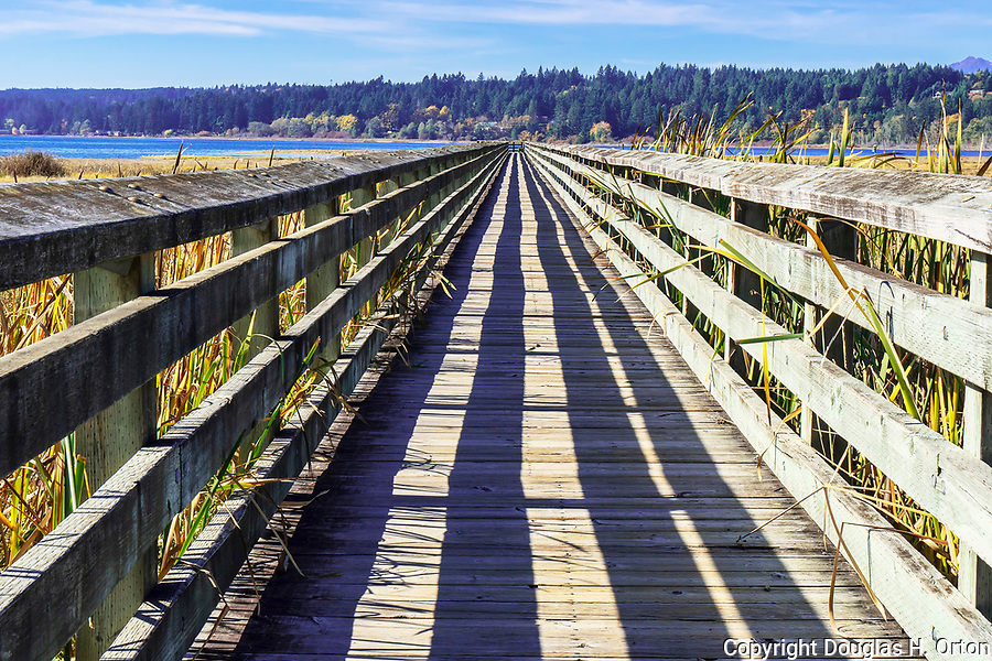 Fall color along boardwalk over theTheler Wetlands Nature Preserve, on Hood Canal, fiord, Washington, Belfair, Washington.  Trails, hiking, boardwalks and wildlife.