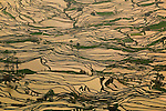 Terraced rice paddies, Yunnan Province, China