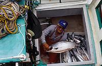 USA/Etats-Unis/Alaska/Env de Ketchikan : Retour de la pêche au saumon